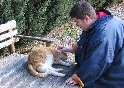 Eine Person mit blauer Jacke streichelt eine rot-weiße Katze, die auf einer Holzbank liegt