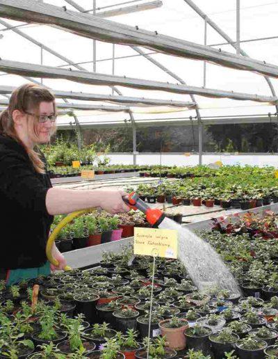 Eine Frau bewässert Pflanzen in einem großen Gewächshaus mit einem Schlauch
